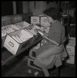 Ouvrière textile de la filature Le Blan (Canteleu, Lille, Nord), vers 1955.