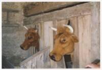 Deux vaches factices (?) dans une étable : photographie, sans lieu ni date.